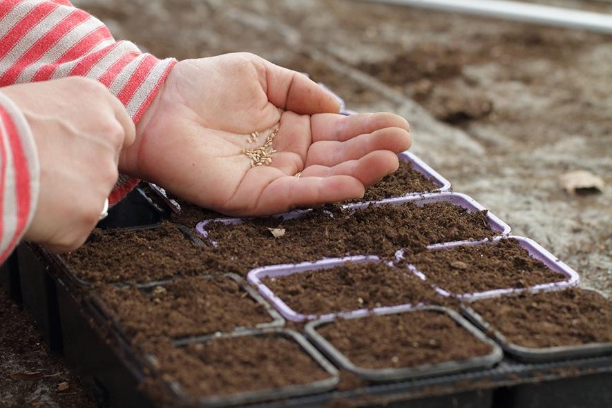 horticulture muller - jardin potager