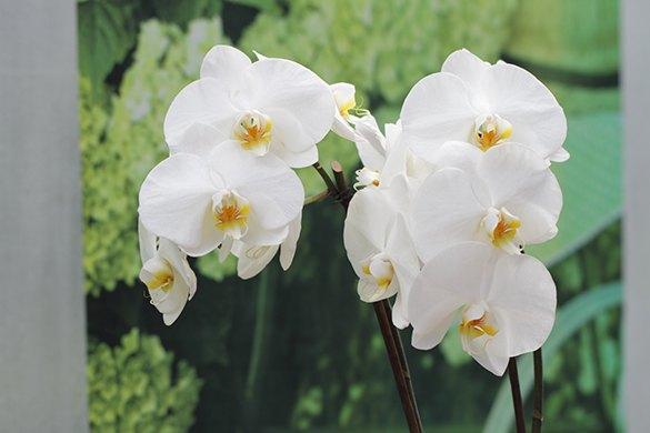 horticulture muller - boutique cadeau orchidées