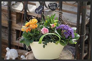 horticulture muller - 4 saisons fête des mamies
