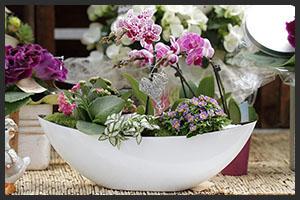horticulture muller - 4 saisons fête des mères