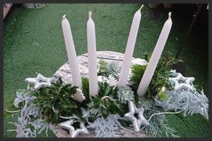 horticulture muller - 4 saisons noel